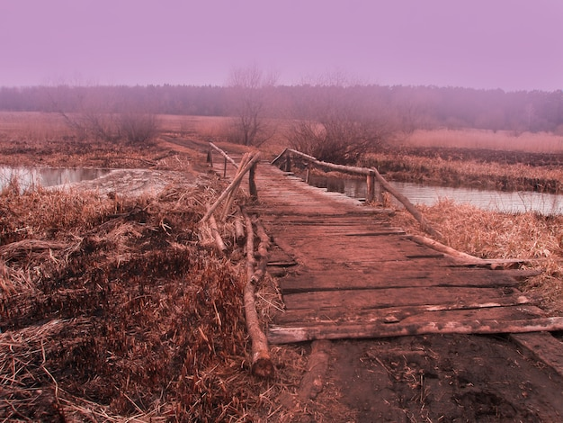 秋の秋の森。秋の森の小さな木製の橋