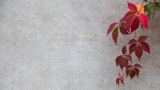 Autumn or fall leaves on a gray background. copyspace
