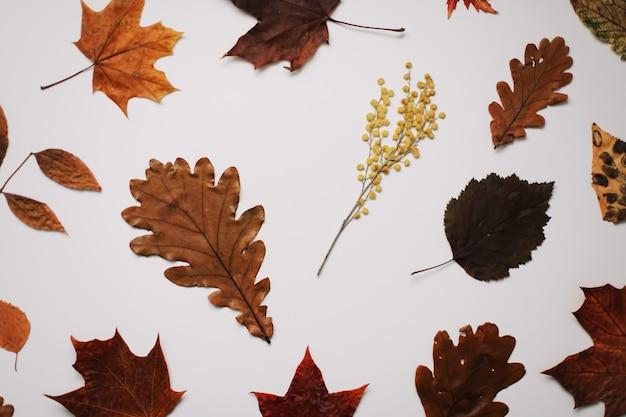 Осенняя текстура с листьями на белом фоне, вид сверху