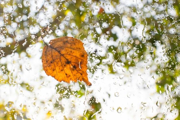 Осенний опавший лист на мокрое стеклянное окно с каплями дождя. концепция осеннего прибытия.