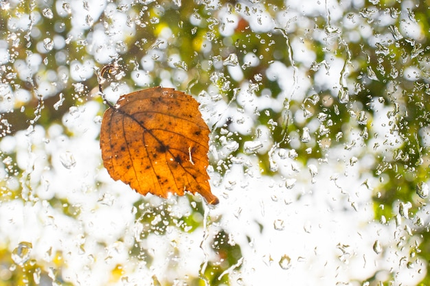 Autumn fallen leaf on wet glass window with raindrops. autumn arrival concept.