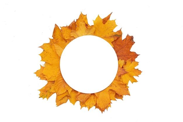Осенние опавшие листья и рябина с круглой копией пространства, изолированной на белом