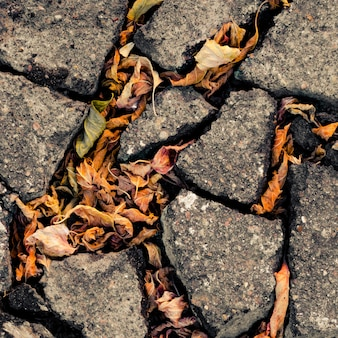 Autumn fallen leaves in the cracks of the asphalt