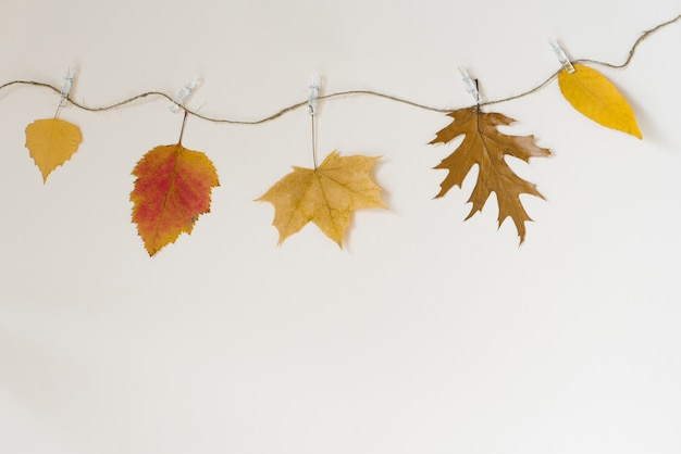 Autumn fallen leaves hang on a rope with clothespins on a light beige background.