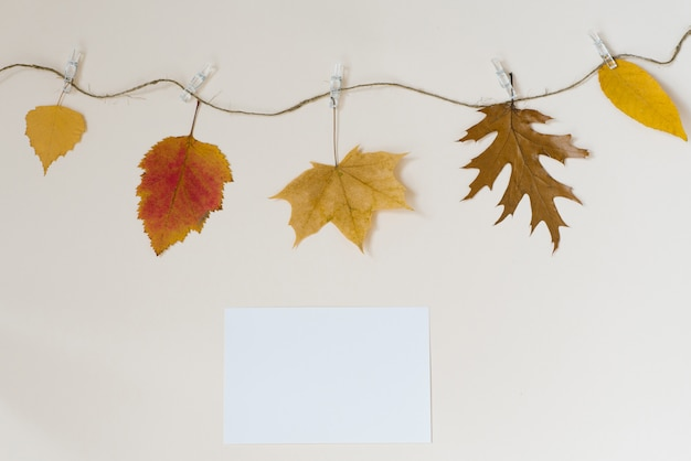 Autumn fallen leaves hang on a rope with clothespins on a light beige wall. the concept of autumn discounts. copy location