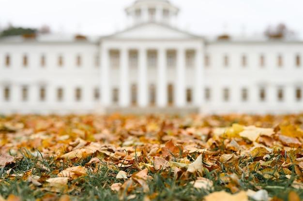 Осенние опавшие листья клена на земле на зеленой траве на фоне размытого белого здания усадьбы в осеннем парке