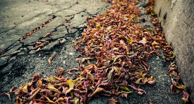 Autumn fallen leaves on the sidewalk
