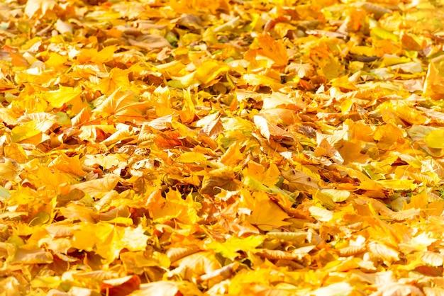公園で秋の落ちたオレンジの葉。秋の背景