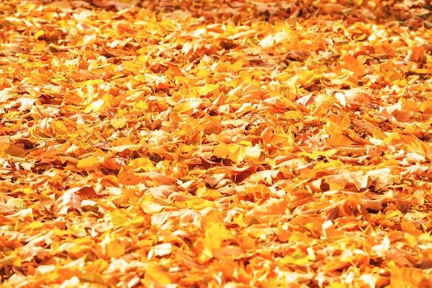 Autumn fallen orange leaves in a park. fall background