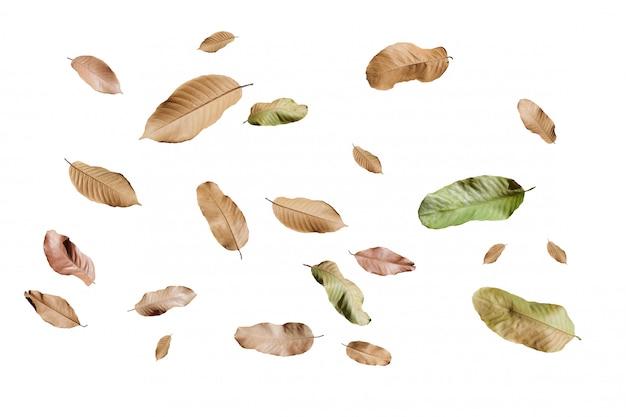 Autumn falling leaves, isolated