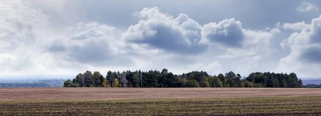 曇り空の遠くにある秋の野原と森、パノラマ