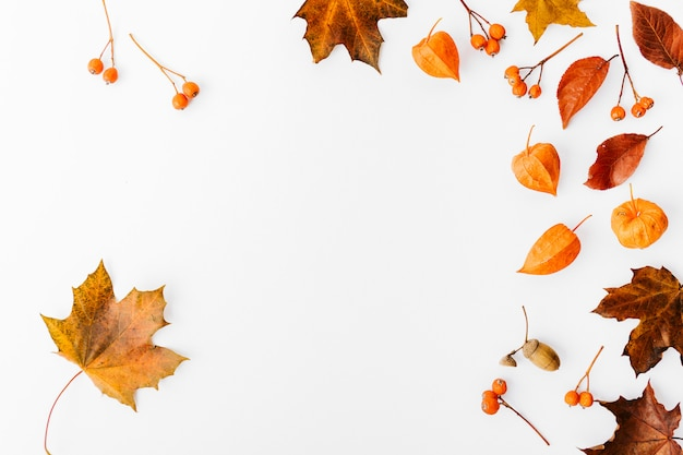 Autumn flat lay background on white