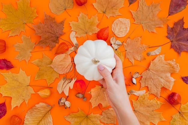 Осенняя плоская композиция с белой тыквой в женских руках