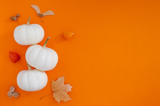 Осенняя плоская композиция с белыми тыквами