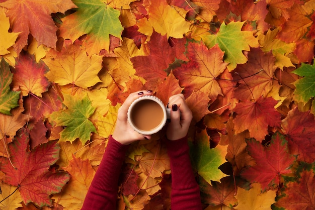 Autumn flat lay. female hands with cup of coffee over colorful maple leaves background.