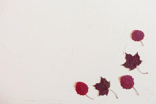 秋フラットレイアウト:パステルニュートラル背景に紅葉。トップビュー、コピースペース。