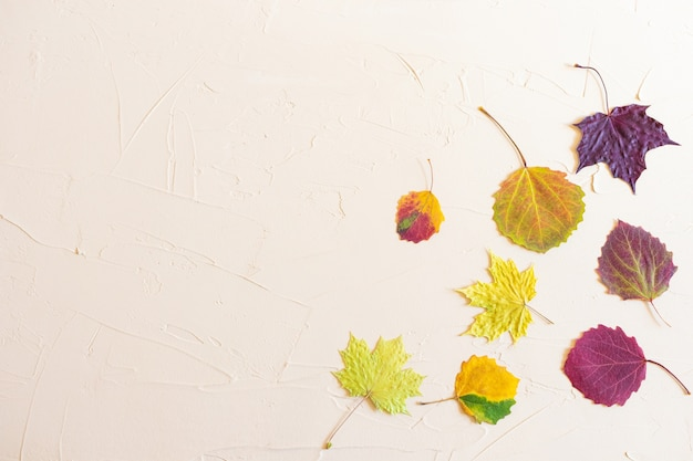 秋フラットレイアウト:パステルニュートラルの背景に赤、黄色、バーガンディ、グリーンの葉。トップビュー、コピースペース。