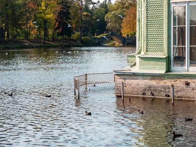 秋の洪水、家の基礎は水で溢れています。