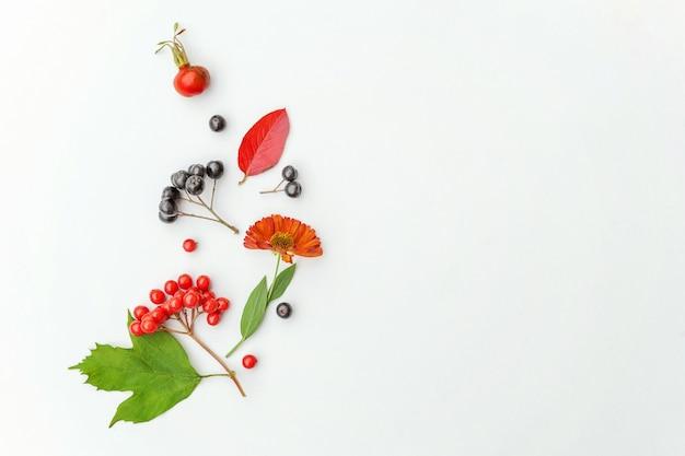 Осенняя цветочная композиция. растения калины, рябины, ягоды шиповника, свежие цветы, красочные листья, изолированные на белом фоне. падение естественных растений экология обои концепции. плоский вид сверху копией пространства