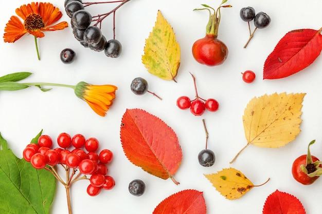 Осенняя цветочная композиция. растения калины, рябины, ягоды шиповника, свежие цветы, красочные листья, изолированные на белом фоне. падение естественных растений экология обои концепции. плоская планировка, вид сверху
