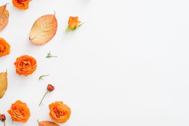 Осенний цветочный дизайн поздравительной открытки красные листья и открытые оранжевые бутоны роз, разбросанные на белом
