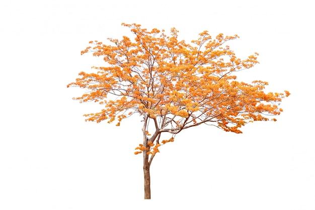 秋の花の木が白い背景で隔離。