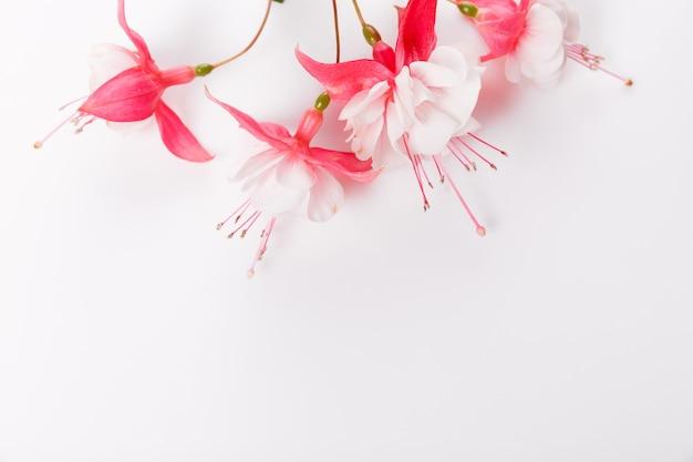 가 꽃 구성입니다. 흰색 바탕에 분홍색 자홍색 꽃으로 만든 프레임입니다. 플랫 레이