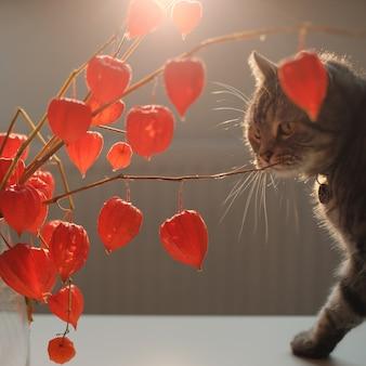 Осенние цветы в вазе и забавный котик в уютном домашнем интерьере