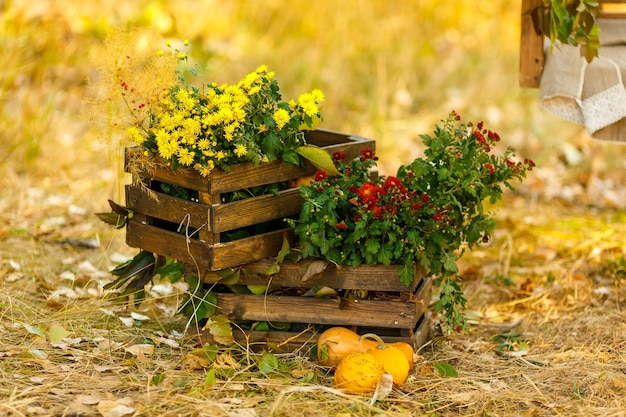 Autumn flowers standing in wooden boxe on the yellowed grass the concept of rural life and harvest
