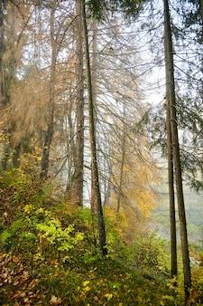 Осенний туманный лес, утренняя природа. ветвь деревьев с желтыми листьями