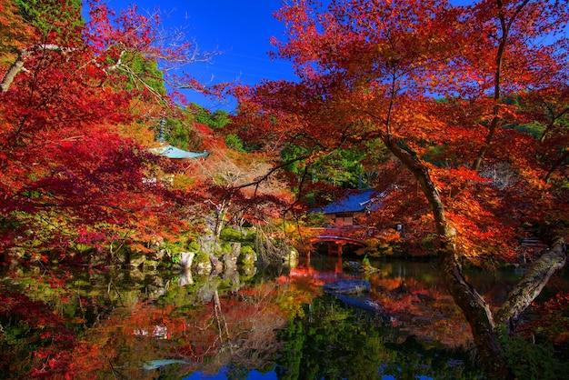 Autumn foliage garden at daigoji temple in kyoto japan