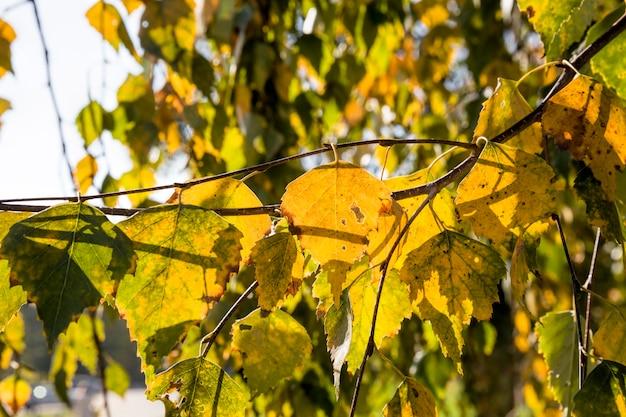 Осенняя листва дерева