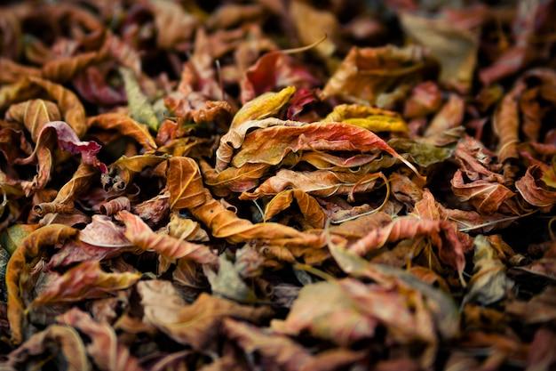 Autumn foliage texture, close up
