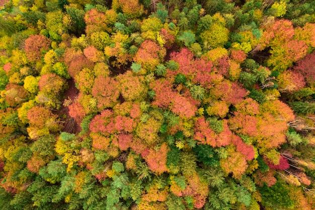 Осенний лес с высоты птичьего полета, желтые и зеленые деревья. фон или текстура.