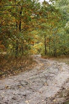 秋の森と道。秋の背景