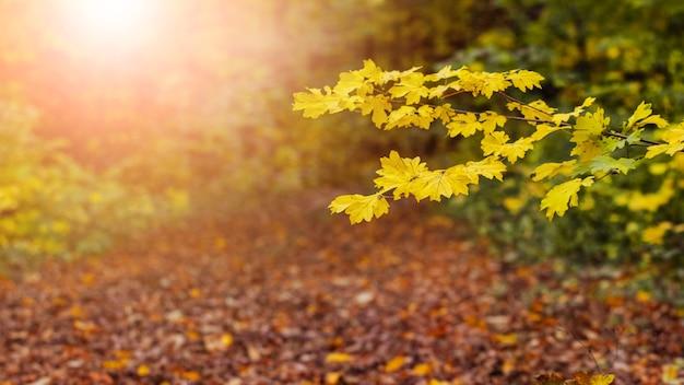 夕焼けの秋の森、前景に黄色の葉、パノラマ