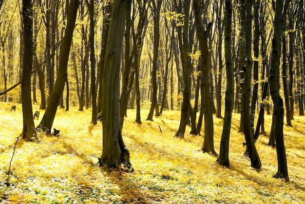 Осенний лес фон в солнечный день