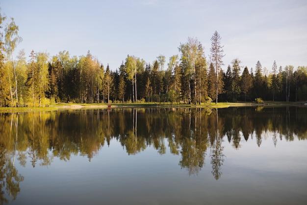 이른 아침에 호수 옆 가을 숲