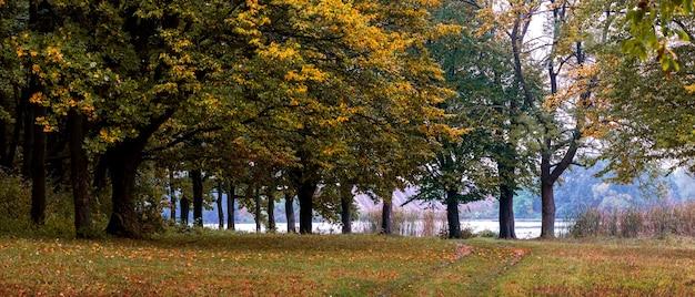川沿いの秋の森。秋の森の道