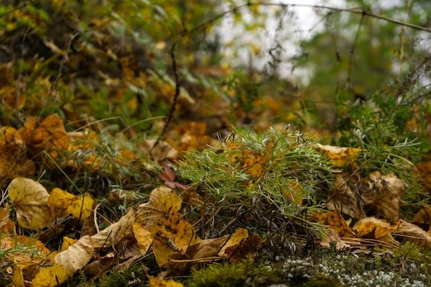 흐릿한 배경에 이끼, 풀, 낙엽이 클로즈업된 가을 숲 바닥