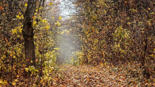 曇りの秋の森。秋の森の密集した茂み。