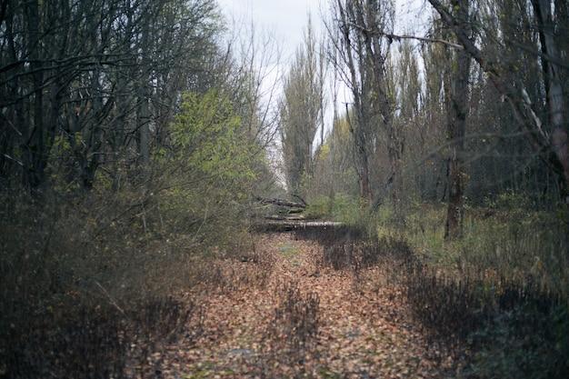 체르노빌 프리 피 야티의 가을 숲