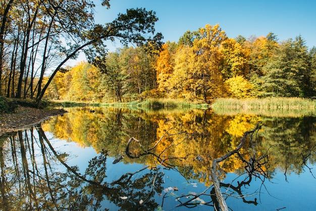 Осенний лес в солнечном свете с отражениями и золотыми листьями