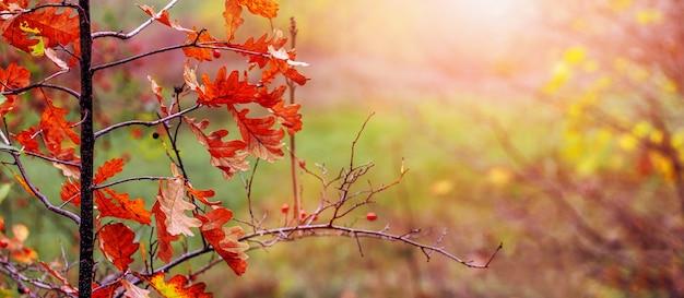 Осенний лес в солнечную погоду с сухими дубовыми листьями на дереве, живописная осень