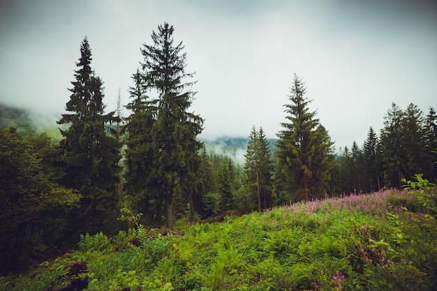 ヨーロッパの国立公園の秋の森