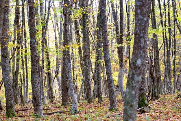 暖かい晴れた日の秋の森