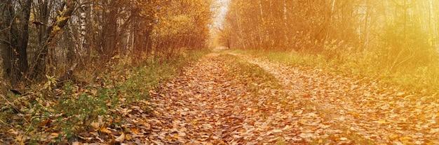 Осенний лесной пейзаж. открытая лесная дорога усыпана красной желто-оранжевой опавшей листвой и деревьями с падающими листьями на обочине пути. путешествие по россии. баннер. вспышка