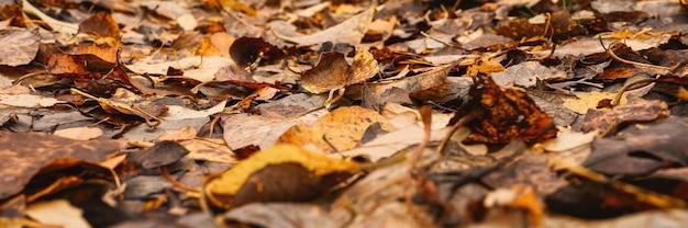 Осенний лесной пейзаж. открытая лесная дорога усыпана красной желто-оранжевой опавшей листвой и деревьями с падающими листьями на обочине пути. путешествие по россии. знамя