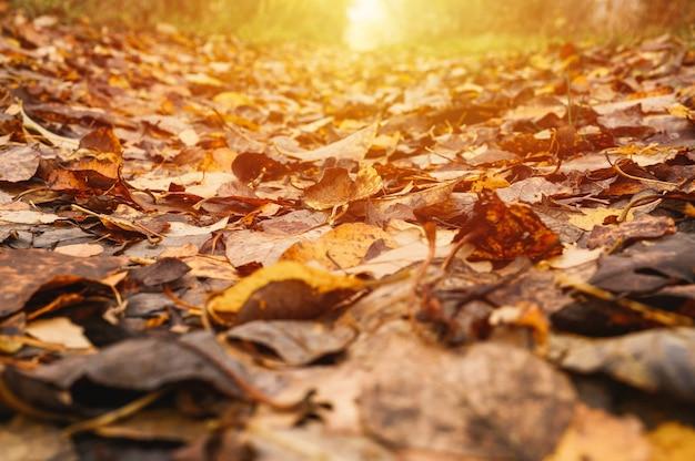 Осенний лесной пейзаж. открытая лесная дорога усыпана красной желто-оранжевой опавшей листвой и деревьями с падающими листьями на обочине пути. путешествие по россии. вспышка