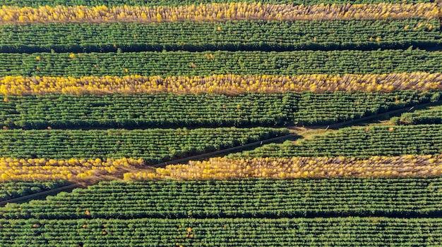 가을 숲 풍경, 줄무늬 가을 숲, quadrocopter 촬영 공중보기